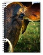 Cow Eating Grass Spiral Notebook