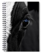 Cow Hey You Looking At Me Spiral Notebook