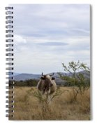 Cow In Pasture Spiral Notebook