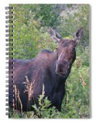Cow Moose Portrait Spiral Notebook