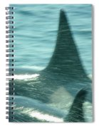 Cow Orca And Her Calf Spiral Notebook
