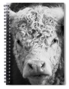 Cow Square Spiral Notebook
