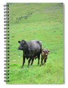 Cow With Calf On Thorpe Hillside Spiral Notebook