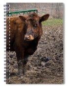 Cows  Spiral Notebook