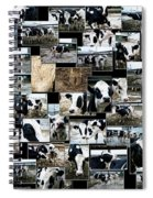 Cows Collage Spiral Notebook