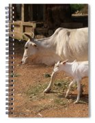 Cows In Hampi Spiral Notebook