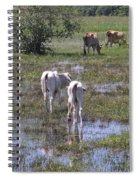 Cows In The Pantanal Spiral Notebook