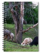 Cows Of Color Spiral Notebook