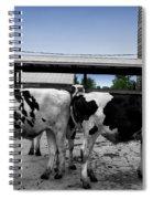 Cows Peek A Boo Spiral Notebook