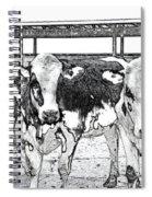 Cows Pencil Sketch Spiral Notebook