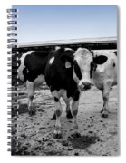 Cows Three In One Spiral Notebook
