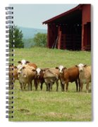 Cows8918 Spiral Notebook
