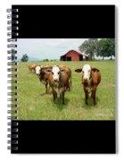 Cows8931 Spiral Notebook