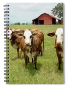 Cows8931 Spiral Notebook