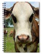 Cows8957 Spiral Notebook