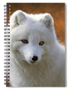 Coy Arctic Fox Spiral Notebook