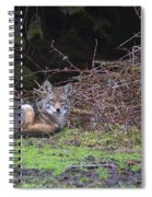 Coyote Curled Up Spiral Notebook