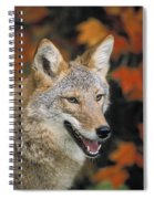 Coyote In Maple Spiral Notebook