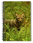Coyote Of The Woods Spiral Notebook