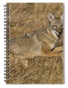 Coyote Running Spiral Notebook
