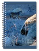 Coyote Wild Spiral Notebook
