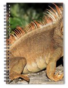 Cozumel Iguana Vacation Spiral Notebook