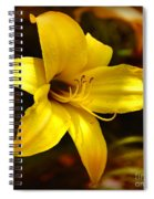 Cozy Yellow Daylily Spiral Notebook