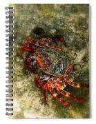 Crab In Cozumel Spiral Notebook