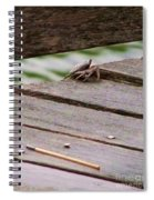 Crab On The Pier  Spiral Notebook