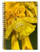 Crab Spider Spiral Notebook