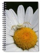 Crab Spider On Daisy Spiral Notebook