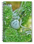 Crab Spider - Thomisidae Spiral Notebook