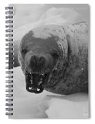 Crabeater Seal.. Spiral Notebook