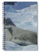 Crabeater Seal On An Iceberg Spiral Notebook