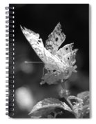 Cracked Wing Spiral Notebook