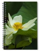 Cream Colored Lotus Spiral Notebook