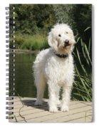 Cream Labradoodle Spiral Notebook