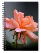 Creamy Peach Rose Spiral Notebook