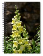 Creamy Yellow Snapdragon Spiral Notebook