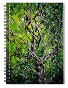 Creeping Vines Spiral Notebook