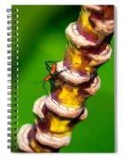 Creepy Crawlies Spiral Notebook