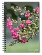 Crepe Myrtle After The Rain Spiral Notebook