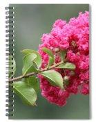 Crepe Myrtle Branch Spiral Notebook