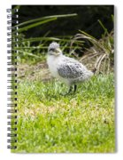 Crested Tern Chick - Montague Island - Australia Spiral Notebook