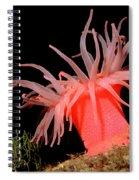 Crimson Anemone Cribrinopsis Fernaldi Spiral Notebook