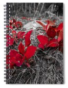 Crimson Foliage Spiral Notebook