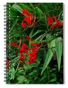 Crocosmia In Red Spiral Notebook