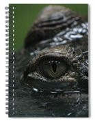 Croc's Eye-1 Spiral Notebook