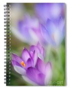 Crocus Fantasy Spiral Notebook