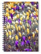 Crocus Field Spiral Notebook